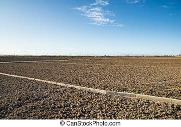 albufera, ואלאנכיה, ספרד