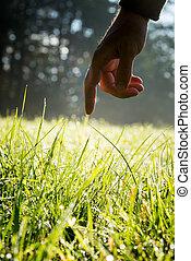 alcançar, sunlit, verde, toque, fresco, capim, homem