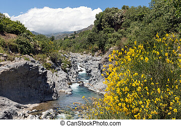 Alcantara gorge with yellow broom flowers at Sicily, Italy