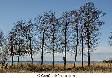 alder, árvores, fila