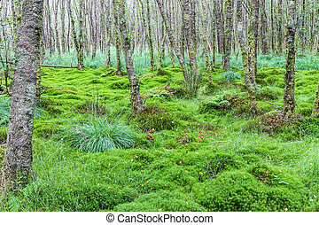 Alder forest with carex and moss