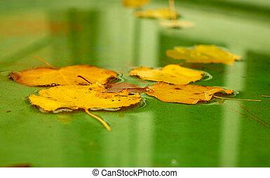 Alder leaf closeup. Autumn season