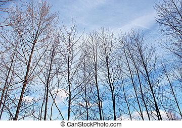 alder tops in the spring