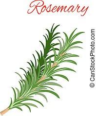 alecrim, culinário, erva, ramos, vetorial, ícone