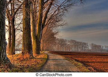 aleja, od, drzewa