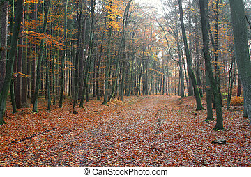 alemán, madera