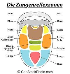 alemão, reflexology, língua