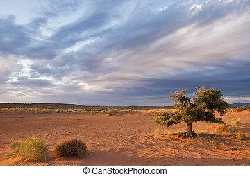 alene, træ, ind, ørken