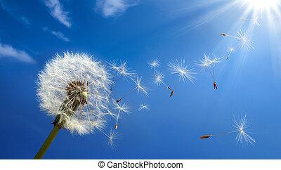 alergia, primavera, conceito