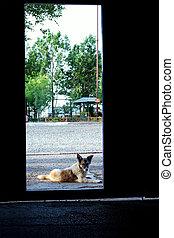 Alert crossbreed dog lying in doorway