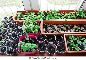 alféizar, Plantas de semilla