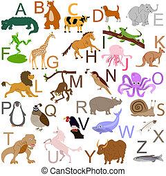 alfabeto, animal