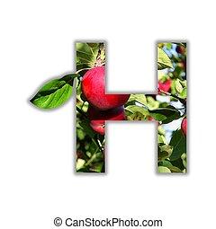 alfabeto, fatto, frutta, fresco