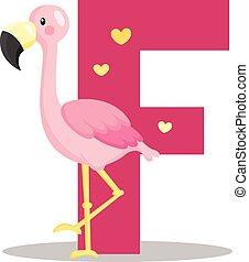 alfabeto, flamingo, f