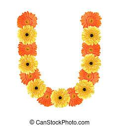 alfabeto, flor, u, criado