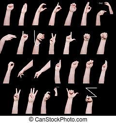 alfabeto, idioma, señal