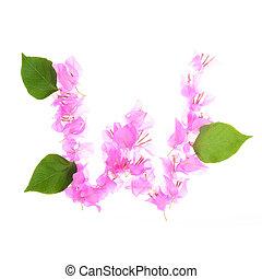 alfabeto, isolado, bougainvillea, fundo, flores brancas