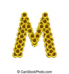 alfabeto, m, isolado, girassol