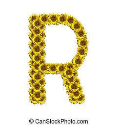 alfabeto, r, isolado, girassol