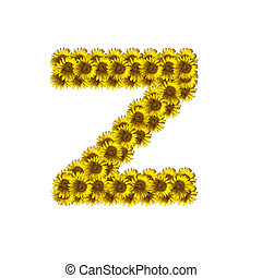 alfabeto, z, isolado, girassol