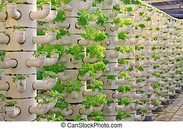 alface, soilless, cultivo, de, três dimensional, oleoduto,...