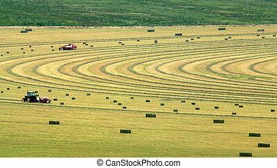 Alfalfa Field Harvest - Field of Alfalfa hay being...