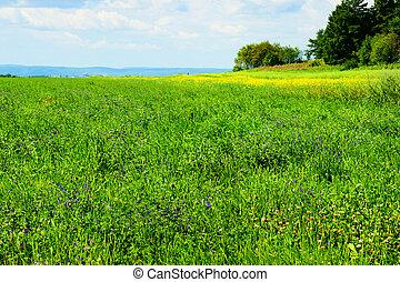 Alfalfa field in bloom - Beautiful hdr rendering of an ...