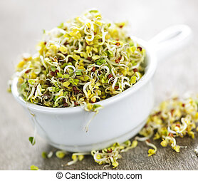Alfalfa sprouts in a cup - Organic young alfalfa sprouts in ...