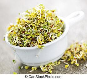 alfalfa, spruiten, kop