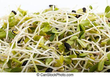 alfalfa, vrijstaand, achtergrond, fris, spruiten, witte