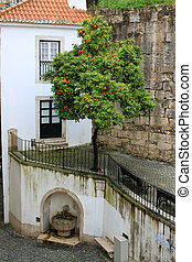 alfama , κρήνη , δέντρο , πορτοκάλι