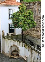 alfama, fuente, árbol, naranja