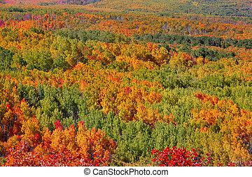 alfombra, árboles, otoño