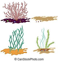 alga, fundo, branca, isolado