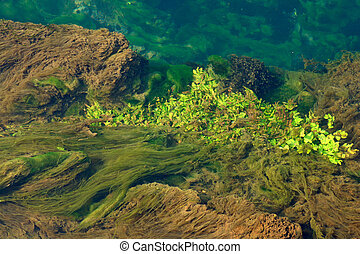 Algae and other vegetation floating on water