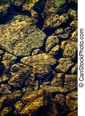 Algae Covered Rocks in Clear Water