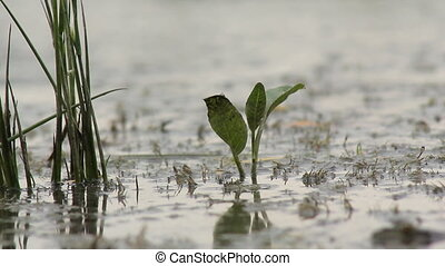 Green Plants in the Swamp