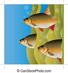 algae., image., flock., peixe, sob, luminoso, vetorial, redfins, colors., water., saída, olhar