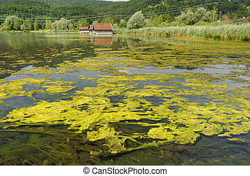algae in lake - algal bloom in lake in Bavaria