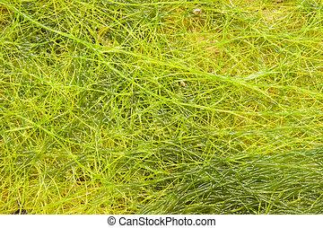 algae laid on wood