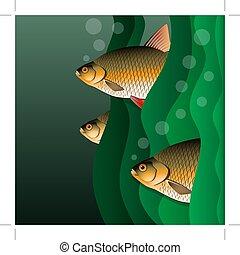 algae., olhar, peixe, sob, redfins, flock., water., saída