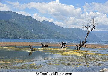 Algae on Lake Atitilan Guatemala - Photo of algae close to...