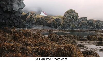 Algae on the shore of the bay in Iceland. Andreev.