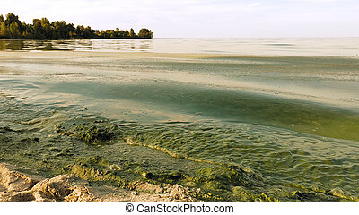 Algal bloom polluted water green color in lake - Polluted...