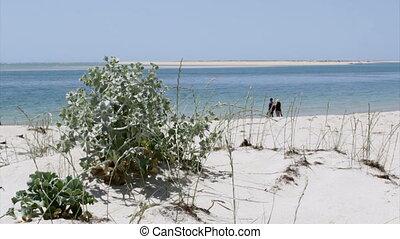 Algarve - Armona Coastal Beach - Armona costal beach view,...
