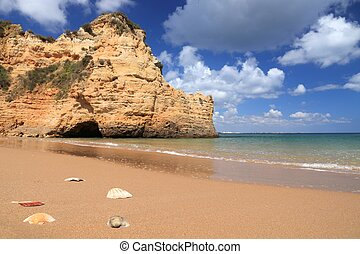 Algarve beach shells