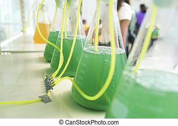 algas, investigación, proceso, en, laboratorio