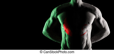 Algeria flag on muscled male torso with abs