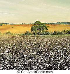 algodão
