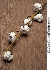 algodão, planta